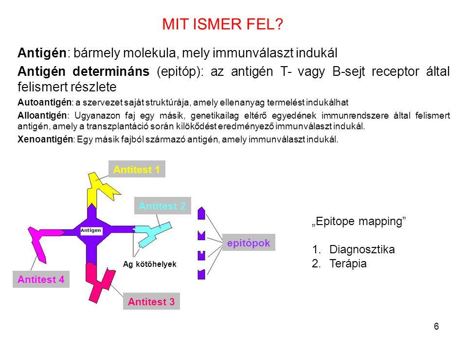 6 Antigén: bármely molekula, mely immunválaszt indukál Antigén determináns (epitóp): az antigén T- vagy B-sejt receptor által felismert részlete Autoa