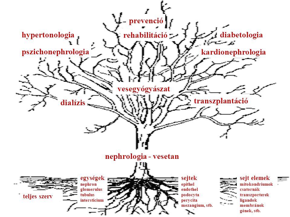 teljes szerv egységek nephron glomerulus tubulus intersticium sejtek epithel endothel podocyta perycita mezangium, stb.