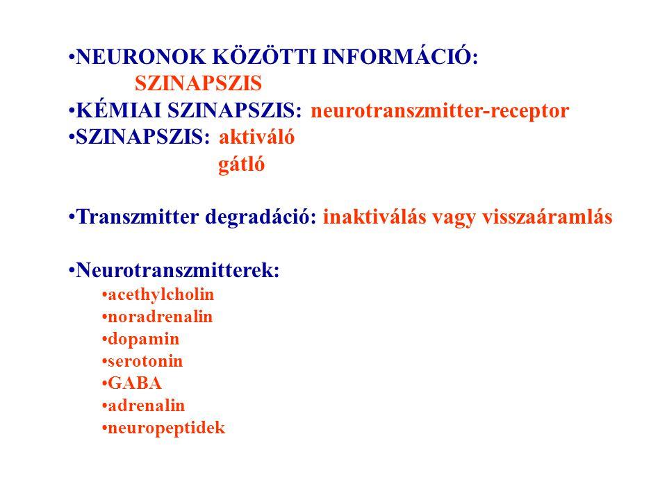 NEURONOK KÖZÖTTI INFORMÁCIÓ: SZINAPSZIS KÉMIAI SZINAPSZIS: neurotranszmitter-receptor SZINAPSZIS: aktiváló gátló Transzmitter degradáció: inaktiválás