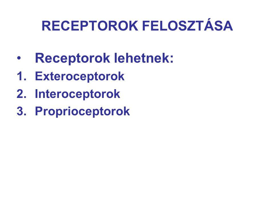 RECEPTOROK FELOSZTÁSA Receptorok lehetnek: 1.Exteroceptorok 2.Interoceptorok 3.Proprioceptorok