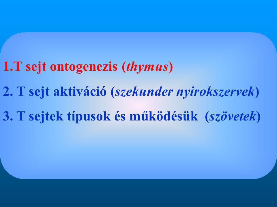 1.T sejt ontogenezis (thymus) 2. T sejt aktiváció (szekunder nyirokszervek) 3.