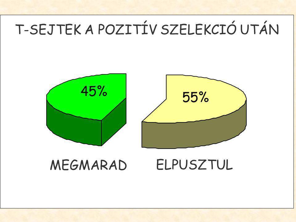 55% 45% MEGMARAD ELPUSZTUL T-SEJTEK A POZITÍV SZELEKCIÓ UTÁN