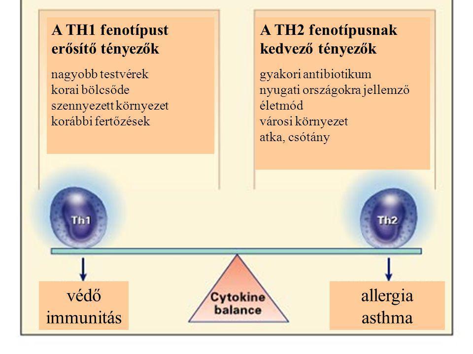 A TH1 fenotípust erősítő tényezők nagyobb testvérek korai bölcsőde szennyezett környezet korábbi fertőzések A TH2 fenotípusnak kedvező tényezők gyakori antibiotikum nyugati országokra jellemző életmód városi környezet atka, csótány védő immunitás allergia asthma