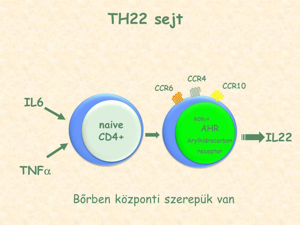 TH22 sejt CCR6 CCR4 CCR10 IL22 ROR  t AHR Arylhidrocarbon receptor naive CD4+ IL6 TNF  Bőrben központi szerepük van
