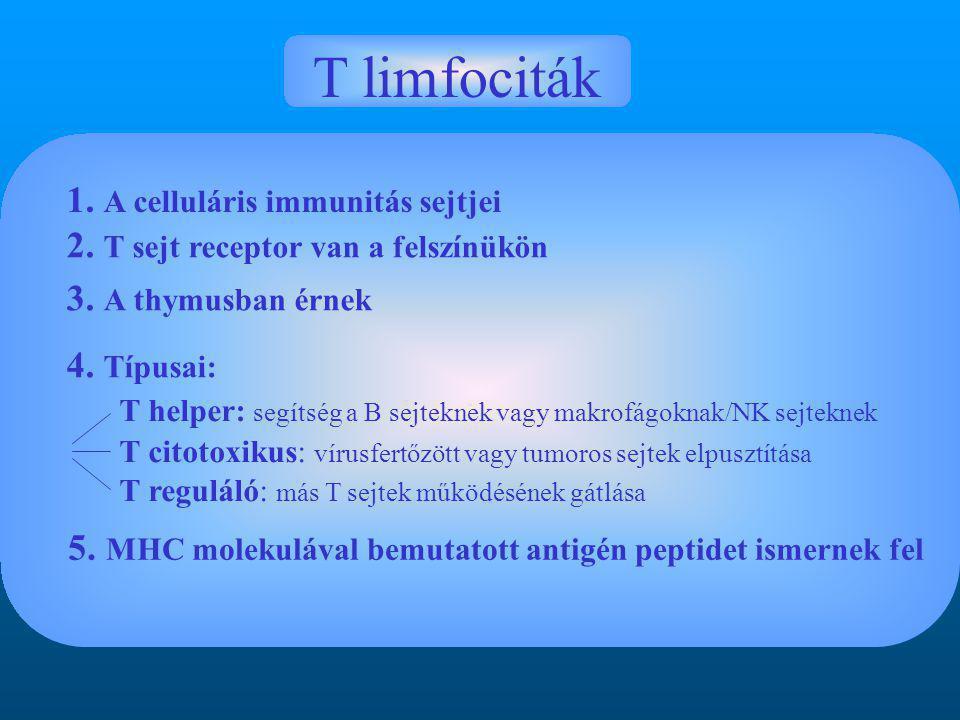 T limfociták 1. A celluláris immunitás sejtjei 2.