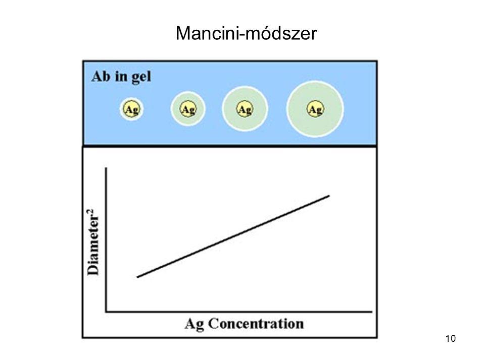 11 Antigén koncentráció meghatározása Mancini módszerrel Antigént tartalmazó lyuktól való távolság Az optimális arányt adó antigén koncentráció.