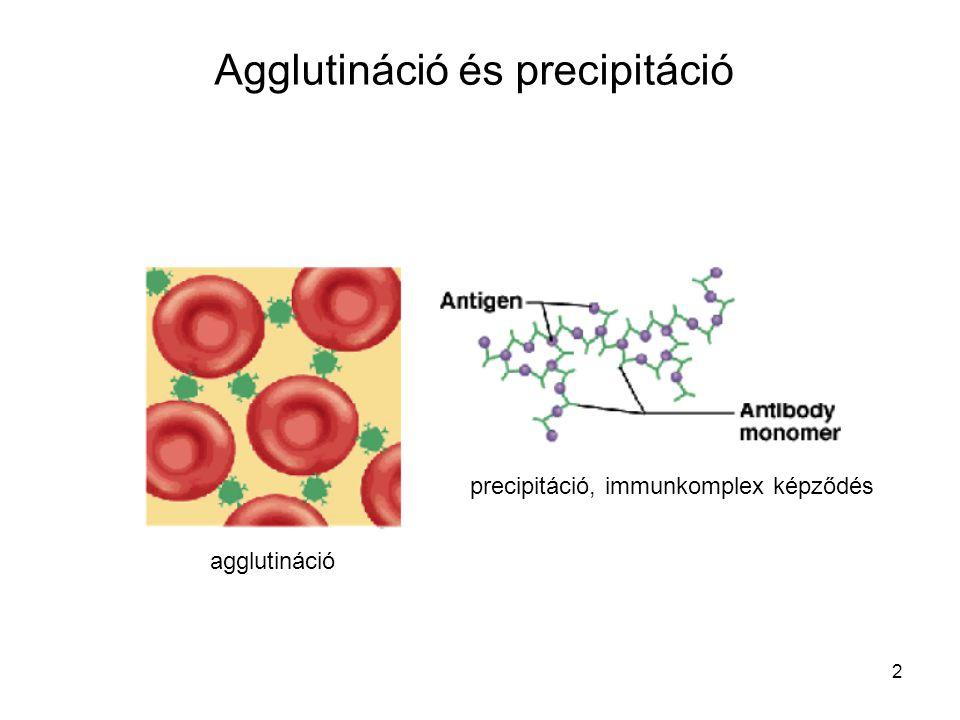 2 Agglutináció és precipitáció agglutináció precipitáció, immunkomplex képződés