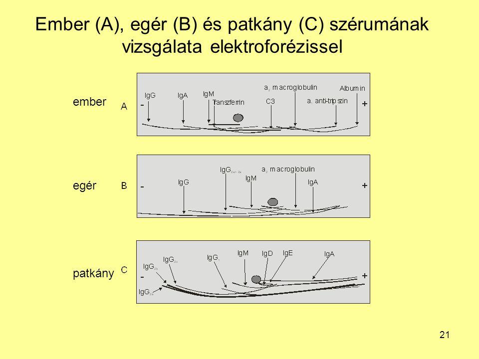 21 Ember (A), egér (B) és patkány (C) szérumának vizsgálata elektroforézissel ember egér patkány