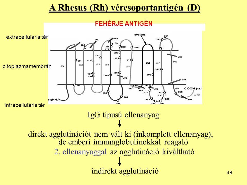 48 A Rhesus (Rh) vércsoportantigén (D) IgG típusú ellenanyag direkt agglutinációt nem vált ki (inkomplett ellenanyag), de emberi immunglobulinokkal re