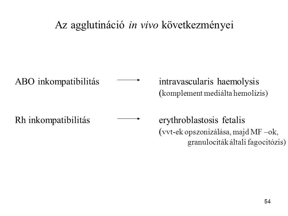 54 Az agglutináció in vivo következményei ABO inkompatibilitásintravascularis haemolysis ( komplement mediálta hemolízis) Rh inkompatibilitáserythrobl