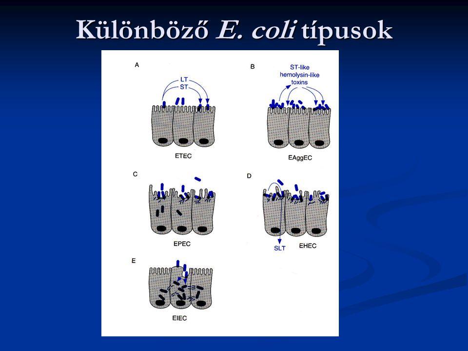 Különböző E. coli típusok