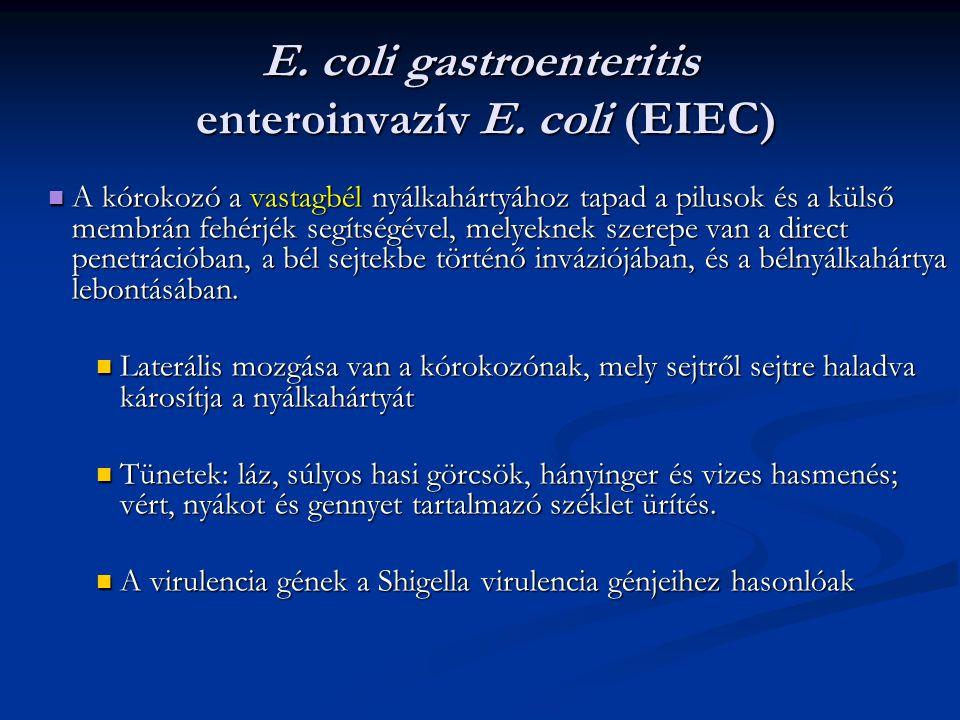 E. coli gastroenteritis enteroinvazív E. coli (EIEC) A kórokozó a vastagbél nyálkahártyához tapad a pilusok és a külső membrán fehérjék segítségével,