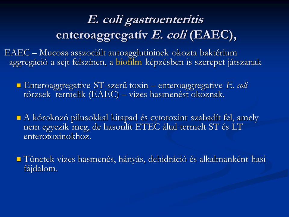 E. coli gastroenteritis enteroaggregatív E. coli (EAEC), EAEC – Mucosa asszociált autoagglutininek okozta baktérium aggregáció a sejt felszínen, a bio