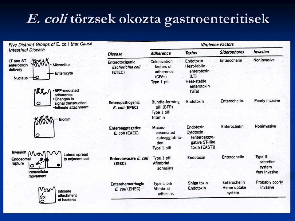 E. coli törzsek okozta gastroenteritisek