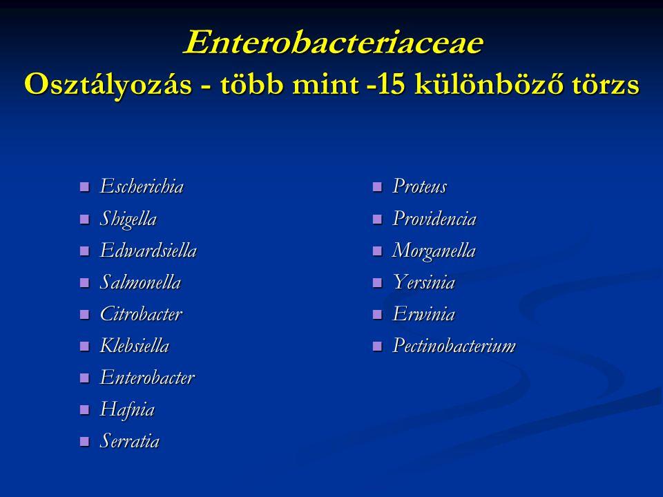 Enterobacteriaceae Osztályozás - több mint -15 különböző törzs Escherichia Escherichia Shigella Shigella Edwardsiella Edwardsiella Salmonella Salmonel