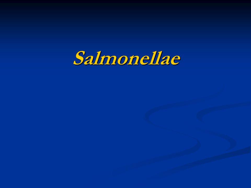 Salmonellae