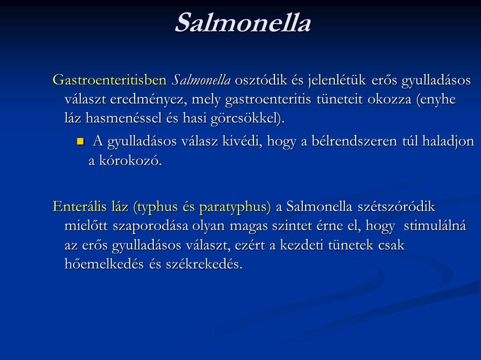 Salmonella Gastroenteritisben Salmonella osztódik és jelenlétük erős gyulladásos választ eredményez, mely gastroenteritis tüneteit okozza (enyhe láz h