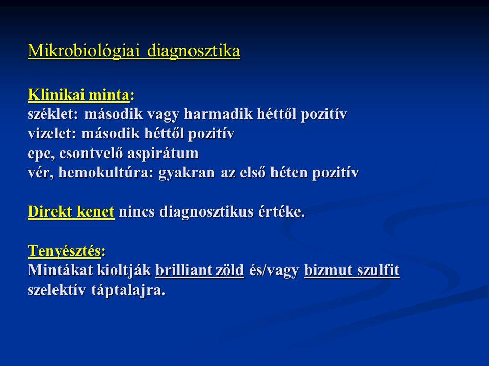Mikrobiológiai diagnosztika Klinikai minta: széklet: második vagy harmadik héttől pozitív vizelet: második héttől pozitív epe, csontvelő aspirátum vér