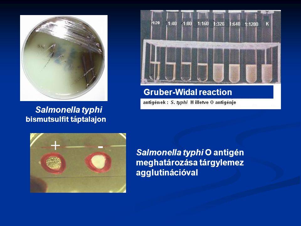 Salmonella typhi bismutsulfit táptalajon Gruber-Widal reaction + - Salmonella typhi O antigén meghatározása tárgylemez agglutinációval