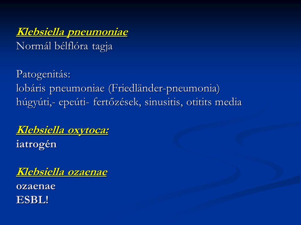 Klebsiella pneumoniae Normál bélflóra tagja Patogenitás: lobáris pneumoniae (Friedländer-pneumonia) húgyúti,- epeúti- fertőzések, sinusitis, otitits m