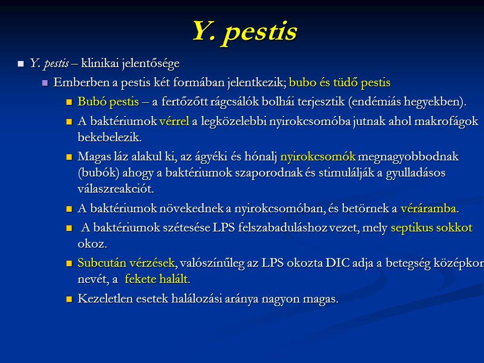 Y. pestis Y. pestis – klinikai jelentősége Y. pestis – klinikai jelentősége Emberben a pestis két formában jelentkezik; bubo és tüdő pestis Emberben a