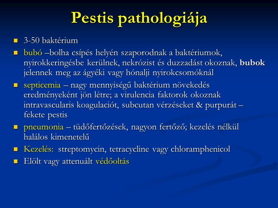 Pestis pathologiája 3-50 baktérium 3-50 baktérium bubó –bolha csípés helyén szaporodnak a baktériumok, nyirokkeringésbe kerülnek, nekrózist és duzzadá