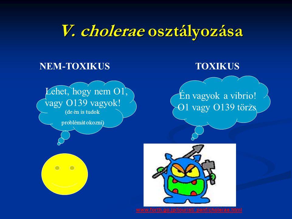 V. cholerae osztályozása Én vagyok a vibrio! O1 vagy O139 törzs www.forth.go.jp/tourist/ panf/cholerae.html NEM-TOXIKUSTOXIKUS Lehet, hogy nem O1, vag