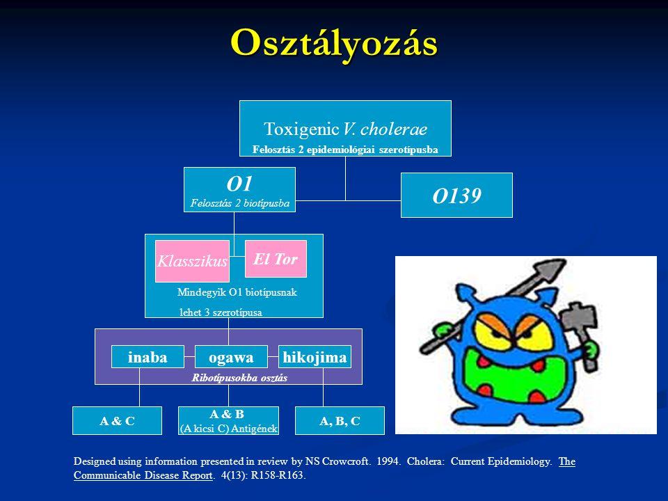 Osztályozás Toxigenic V. cholerae O1 Felosztás 2 biotípusba inabaogawahikojima A & B (A kicsi C) Antigének A & C O139 A, B, C Mindegyik O1 biotípusnak