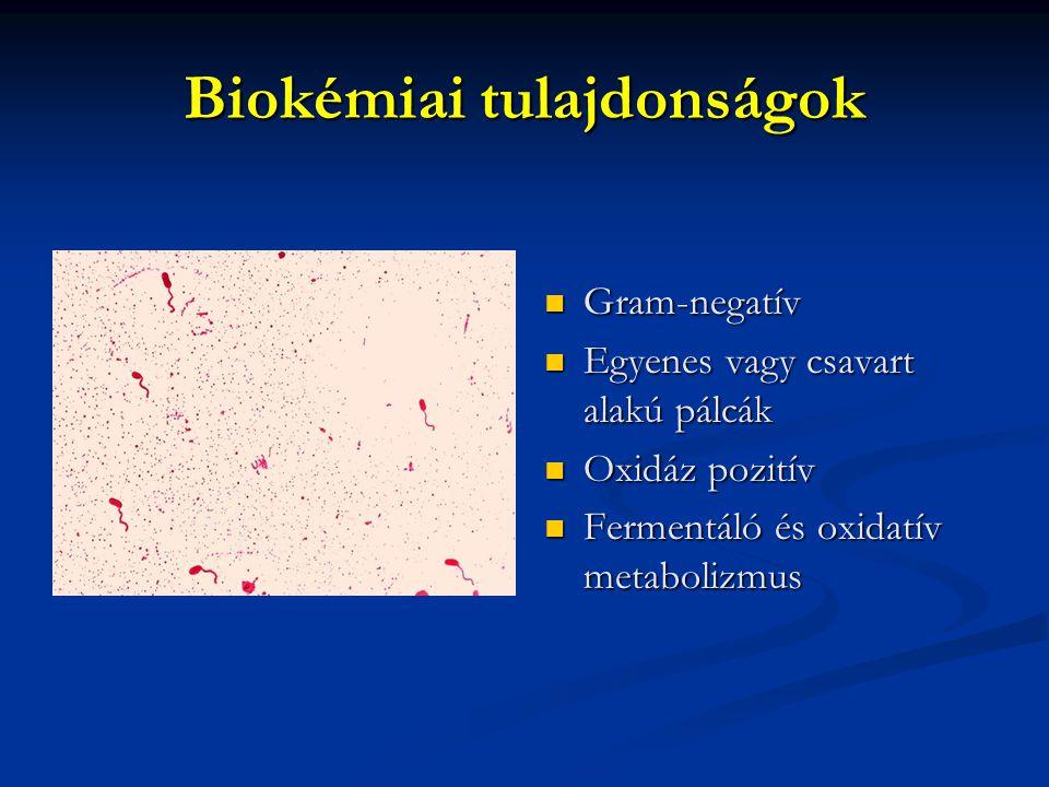 Biokémiai tulajdonságok Gram-negatív Egyenes vagy csavart alakú pálcák Oxidáz pozitív Fermentáló és oxidatív metabolizmus