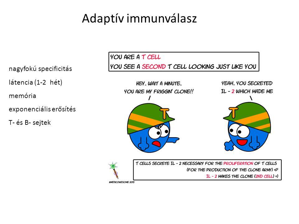 Adaptív immunválasz nagyfokú specificitás látencia (1-2 hét) memória exponenciális erősítés T- és B- sejtek, antitestek