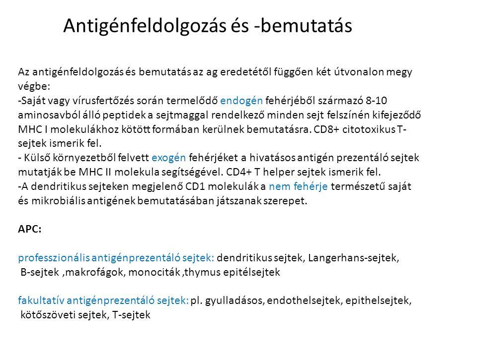 Antigénfeldolgozás és -bemutatás Az antigénfeldolgozás és bemutatás az ag eredetétől függően két útvonalon megy végbe: -Saját vagy vírusfertőzés során