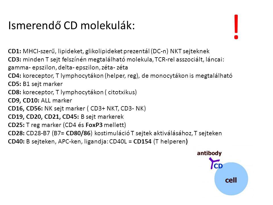 Ismerendő CD molekulák: CD1: MHCI-szerű, lipideket, glikolipideket prezentál (DC-n) NKT sejteknek CD3: minden T sejt felszínén megtalálható molekula,
