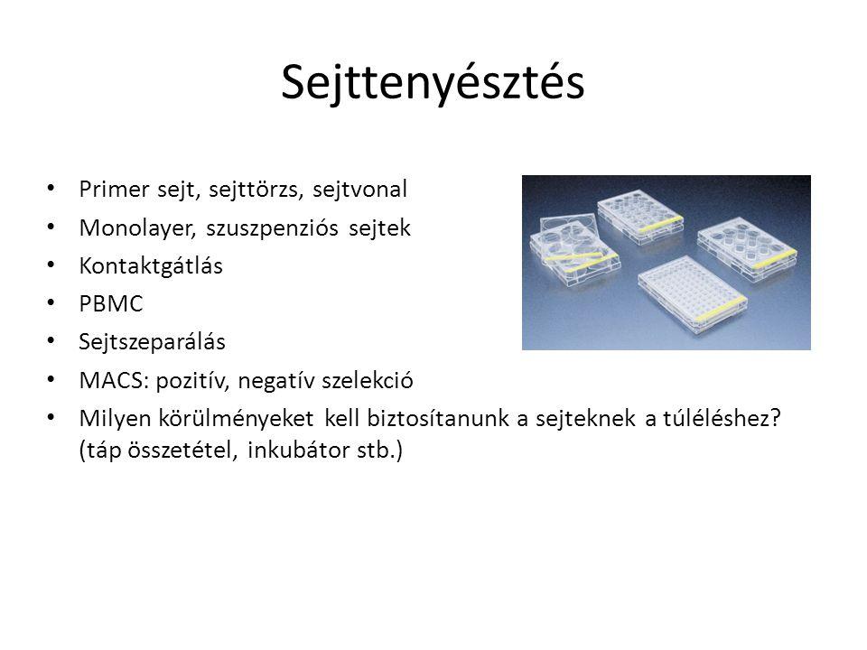 Sejttenyésztés Primer sejt, sejttörzs, sejtvonal Monolayer, szuszpenziós sejtek Kontaktgátlás PBMC Sejtszeparálás MACS: pozitív, negatív szelekció Mil