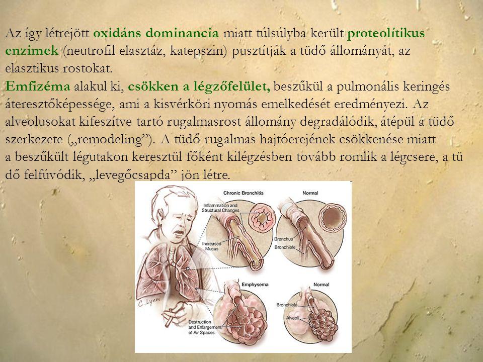 Az így létrejött oxidáns dominancia miatt túlsúlyba került proteolítikus enzimek (neutrofil elasztáz, katepszin) pusztítják a tüdő állományát, az elas