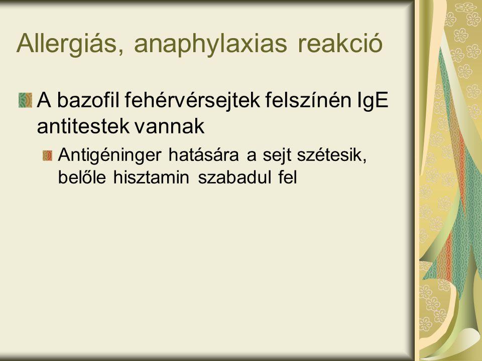 Allergiás, anaphylaxias reakció A bazofil fehérvérsejtek felszínén IgE antitestek vannak Antigéninger hatására a sejt szétesik, belőle hisztamin szabadul fel