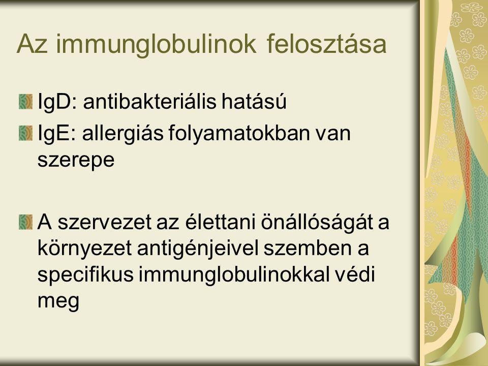 Az immunglobulinok felosztása IgD: antibakteriális hatású IgE: allergiás folyamatokban van szerepe A szervezet az élettani önállóságát a környezet antigénjeivel szemben a specifikus immunglobulinokkal védi meg