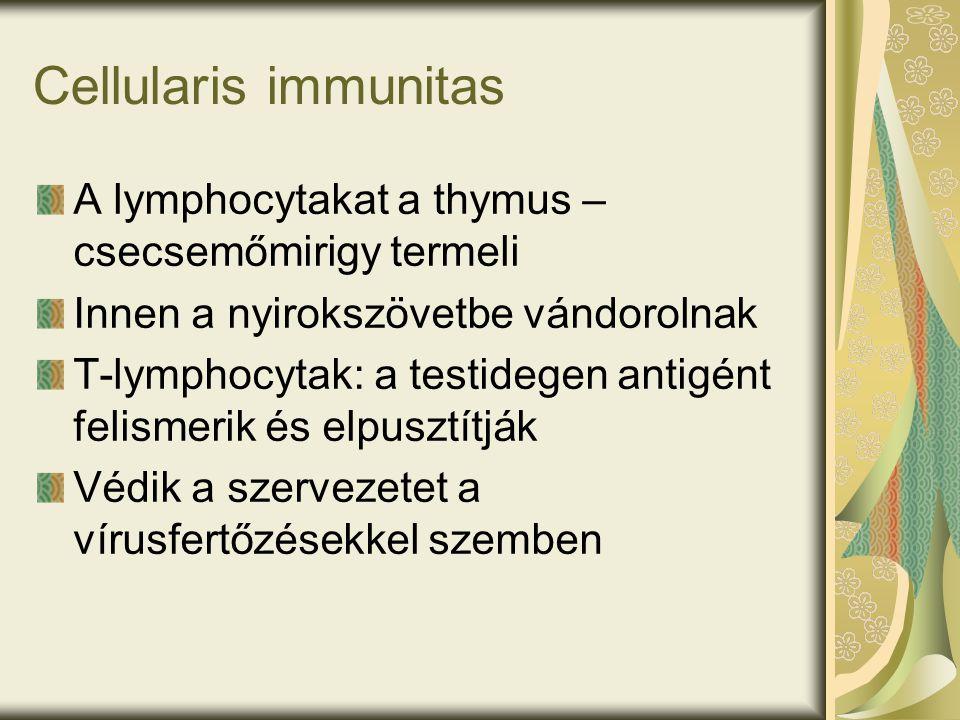 Cellularis immunitas A lymphocytakat a thymus – csecsemőmirigy termeli Innen a nyirokszövetbe vándorolnak T-lymphocytak: a testidegen antigént felismerik és elpusztítják Védik a szervezetet a vírusfertőzésekkel szemben