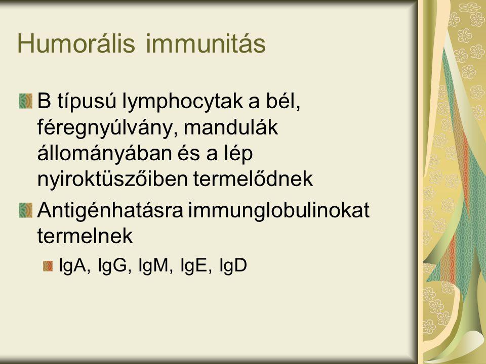 Humorális immunitás B típusú lymphocytak a bél, féregnyúlvány, mandulák állományában és a lép nyiroktüszőiben termelődnek Antigénhatásra immunglobulinokat termelnek IgA, IgG, IgM, IgE, IgD