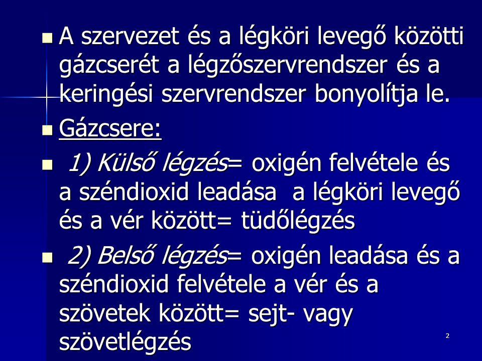 23 Tüdő (4): 2.