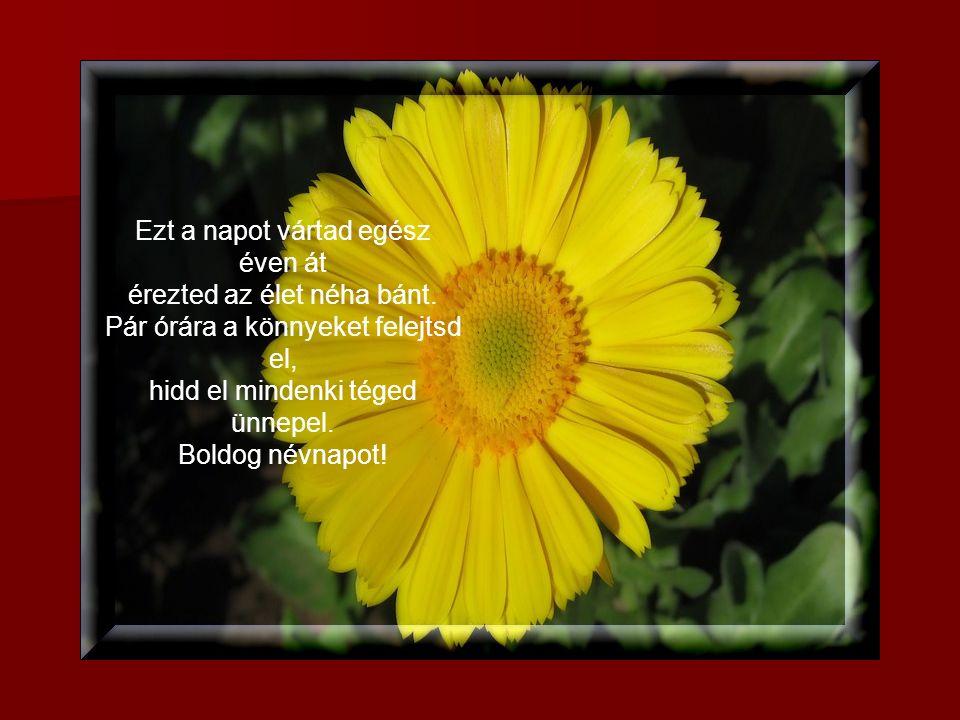 Bár nem adok egész világot neked, bárhogy is kívánod. Ha nem is adok virágot, boldog névnapot kívánok.