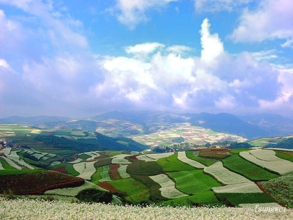 Szeptemberben az olajos növények fehér színe uralkodik.