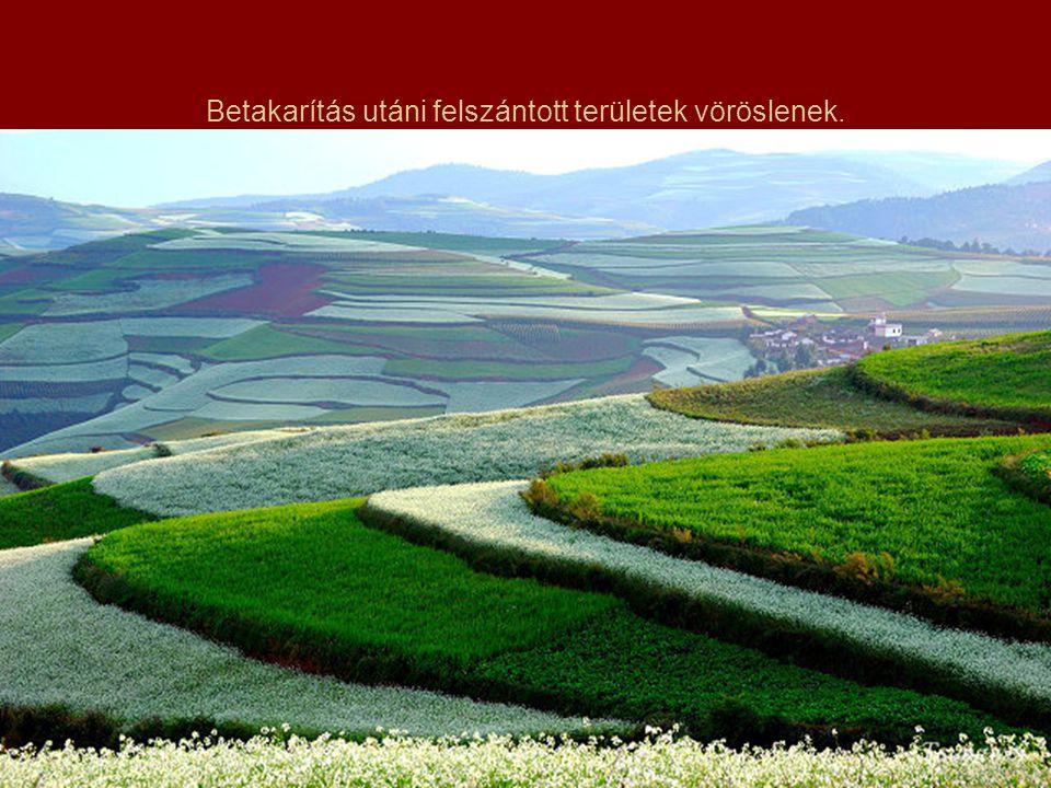 A növények (burgonya, zab, kukorica, olajos virágok, zöldségek stb.) úgy vannak elrendezve, hogy messziről úgy tűnik, mintha Isten festette volna őket