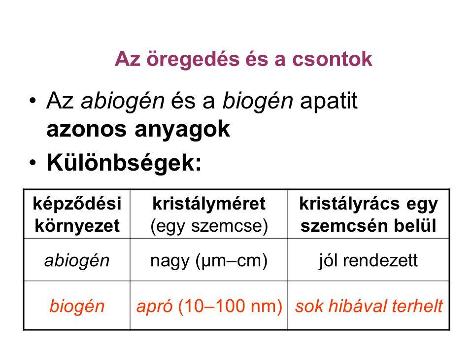 Az abiogén és a biogén apatit azonos anyagok Különbségek: képződési környezet kristályméret (egy szemcse) kristályrács egy szemcsén belül abiogénnagy (μm–cm)jól rendezett biogénapró (10–100 nm)sok hibával terhelt Az öregedés és a csontok