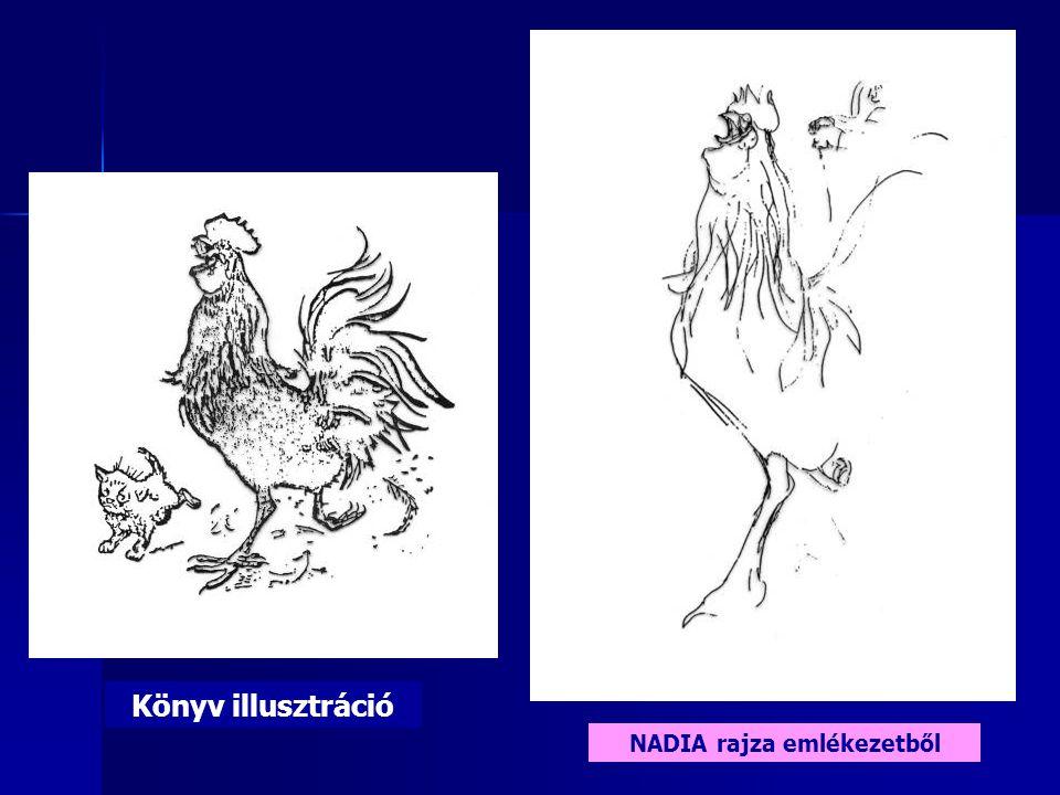 Könyv illusztráció NADIA rajza emlékezetből