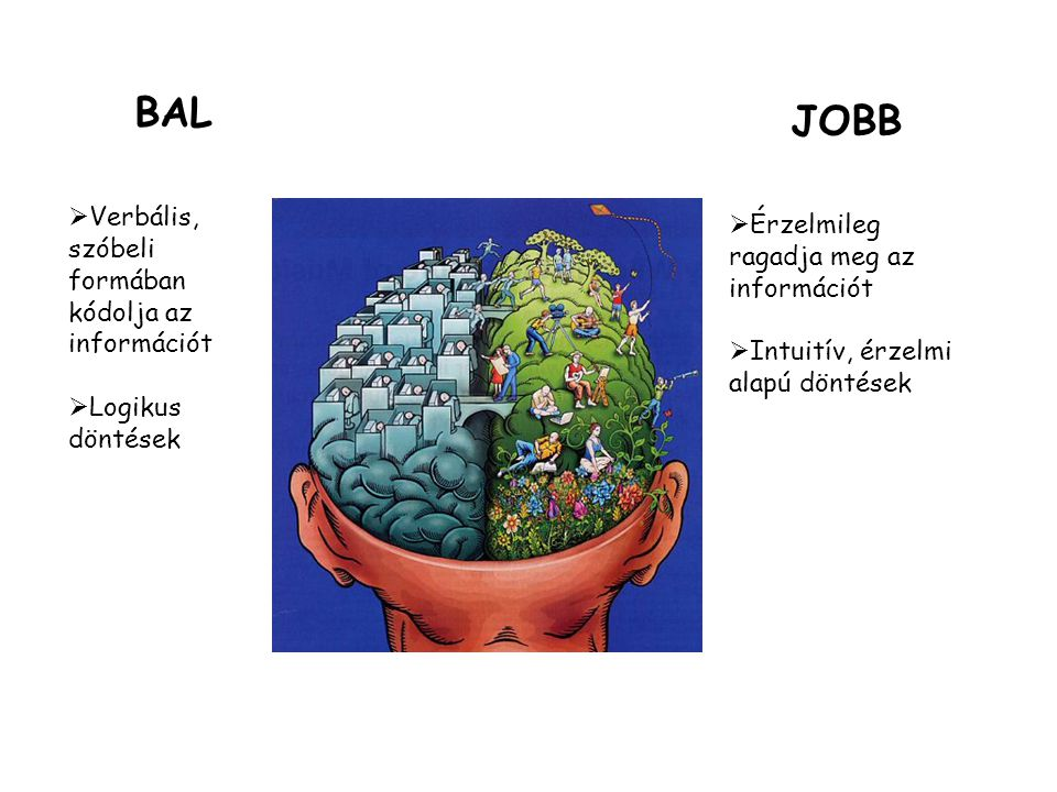 BAL  Verbális, szóbeli formában kódolja az információt  Logikus döntések JOBB  Érzelmileg ragadja meg az információt  Intuitív, érzelmi alapú dönt