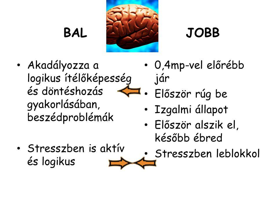 BAL Akadályozza a logikus ítélőképesség és döntéshozás gyakorlásában, beszédproblémák Stresszben is aktív és logikus JOBB 0,4mp-vel előrébb jár Előszö