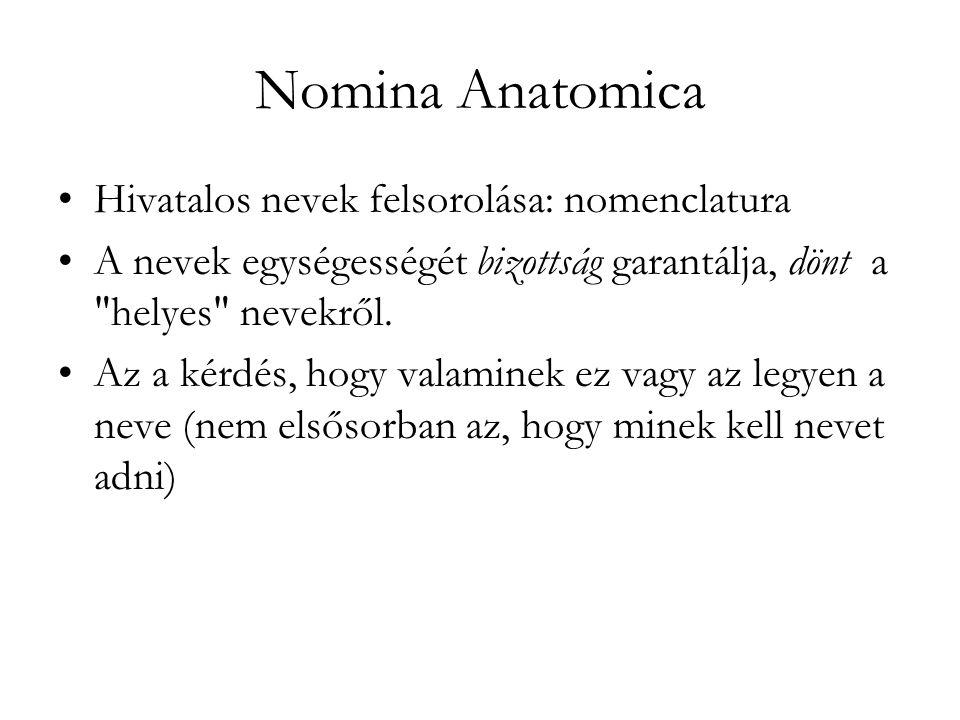 Nomina Anatomica Hivatalos nevek felsorolása: nomenclatura A nevek egységességét bizottság garantálja, dönt a