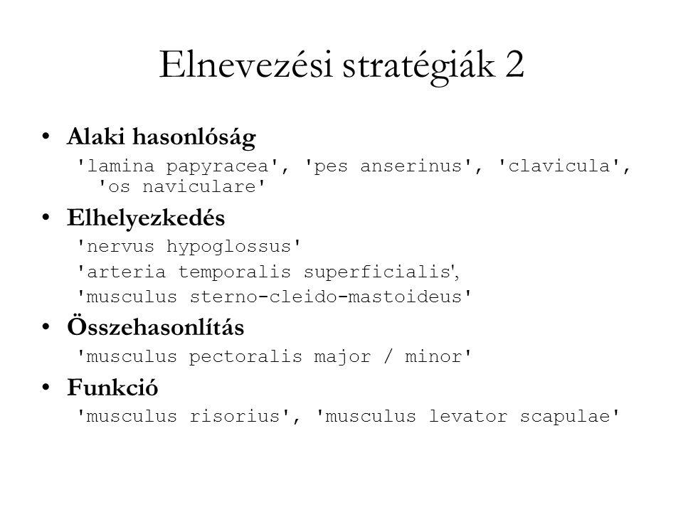 Elnevezési stratégiák 2 Alaki hasonlóság 'lamina papyracea', 'pes anserinus', 'clavicula', 'os naviculare' Elhelyezkedés 'nervus hypoglossus' 'arteria