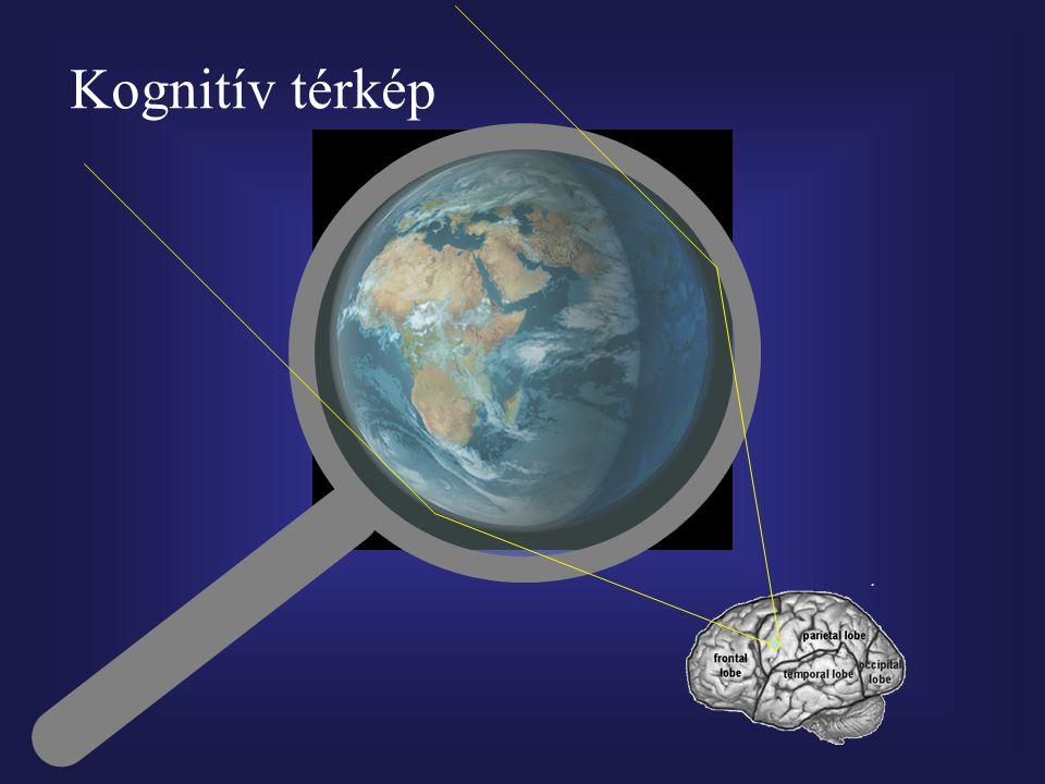 Kognitív térkép