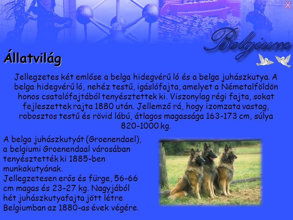 Állatvilág Jellegzetes két emlőse a belga hidegvérű ló és a belga juhászkutya.